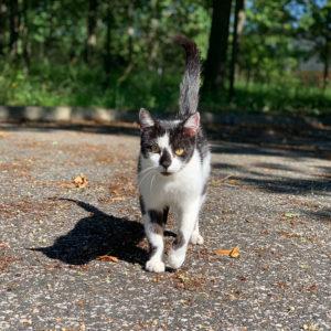 photo de la chatte Crapaudine