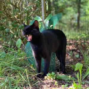 photo du chat Pompidoux